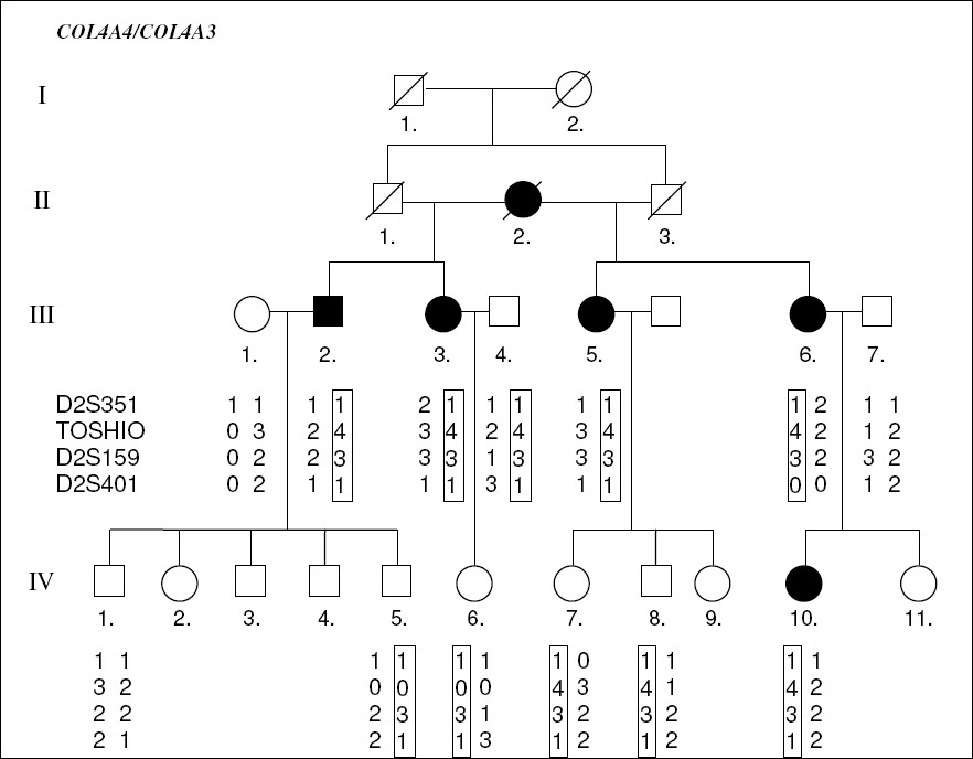 Figure 1. Pedigree of Alport's syndrome family.