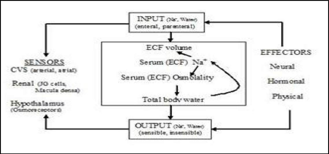 Figure 1. An overview of sodium and water balance